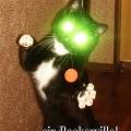 baskerville_cat